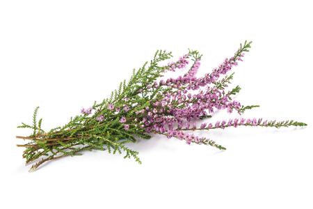 흰색 배경에 고립 된 보라색 헤더 꽃