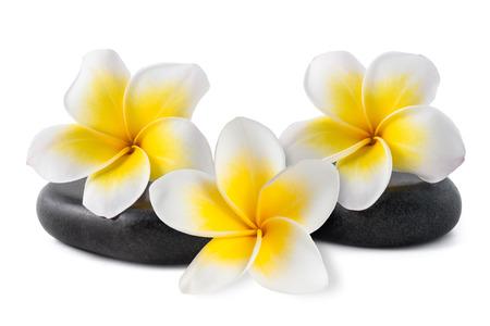Frangipani flowers on zen pebbles isolated on white Stock Photo