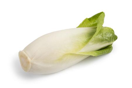 Verse Belgische andijvie die op witte achtergrond wordt geïsoleerd Stockfoto