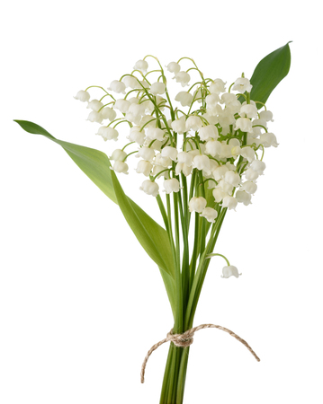 Lily of the valley bunch isolated on white Standard-Bild