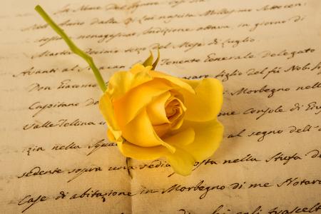 Yellow rose on old handwriting Stock Photo