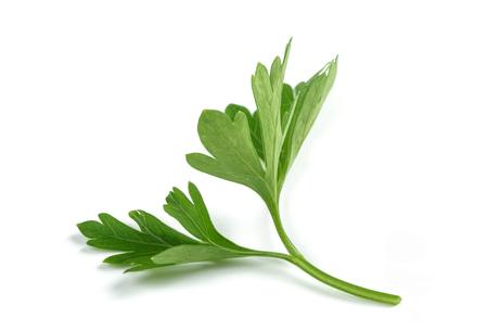 Fresh parsley sprigs isolated on white background Reklamní fotografie