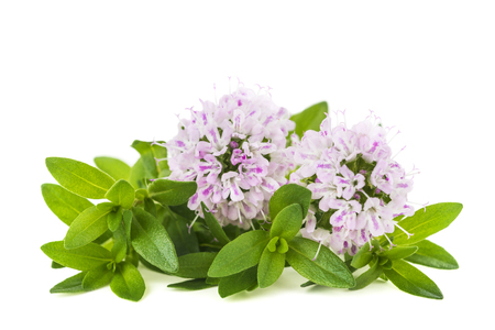 thyme flowers isolated on white background Stock Photo