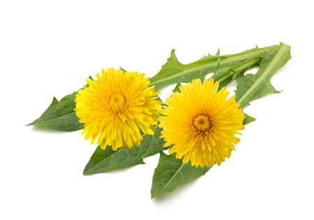 dandelion with flowers isolated on white background Stock Photo