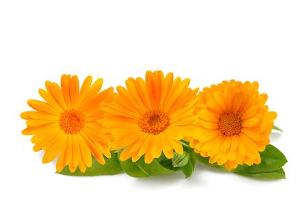 Marigold flowers isolated on white Zdjęcie Seryjne - 115209194