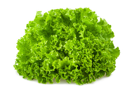 Frisee salad isolated on white background Foto de archivo - 115209269