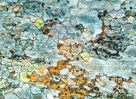 Texture Of Multi-Colored Lichen On A Rock