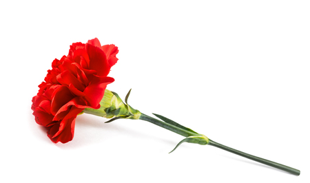 Red carnation flower isolated on white background Stock Photo