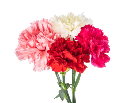 Carnation bouquet isolated on white background