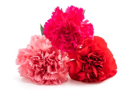 Carnations isolated on white background