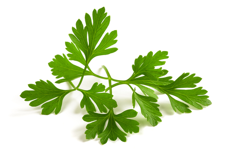 Fresh parsley sprigs isolated on white background Stok Fotoğraf