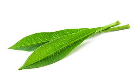 Frangipani leaves isolated on white background