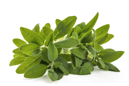 Sage (salvia officinalis) plants isolated on white Stock fotó