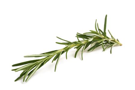 Rosemary sprig isolated on white background Stockfoto