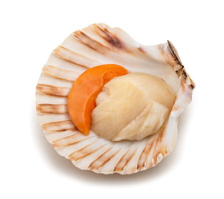 frische Muschel Jakobsmuschel lokalisiert auf weißem Hintergrund Standard-Bild