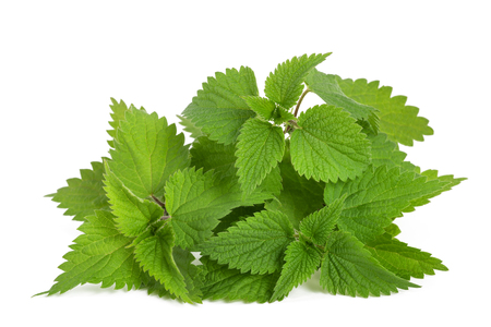 Fresh nettles isolated on white background
