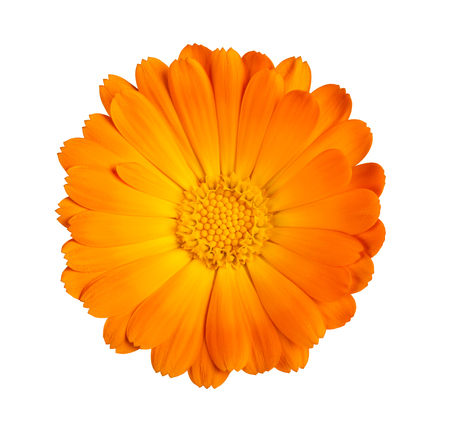 Marigold flower isolated on white