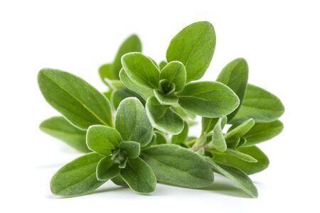 Fresh green marjoram plants isolated on white background