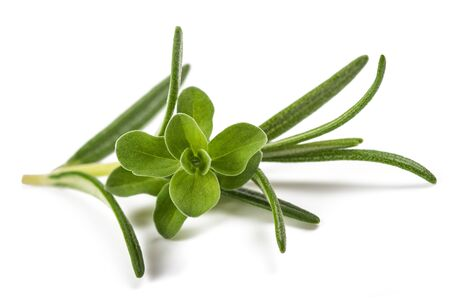 rosemary and marjoram sprig isolated on white background