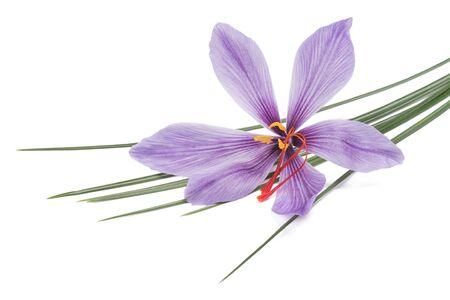 saffron flower isolated on white background
