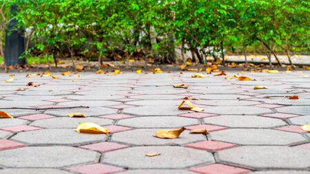 cluttered: Pathway cluttered with dry leaves