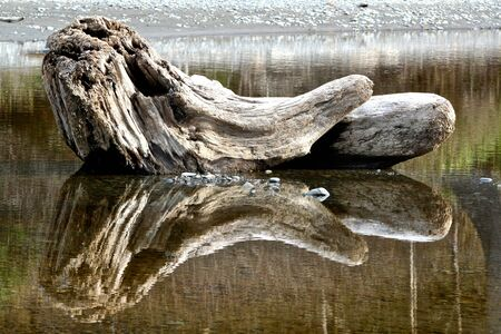 Wooden log reflected in water