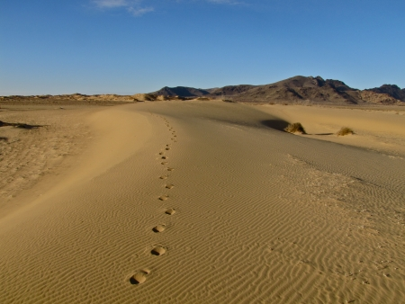 footmark: Footprints in Mongolian sands
