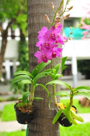 orchidea: Beautitul Orchid flowers Stock Photo