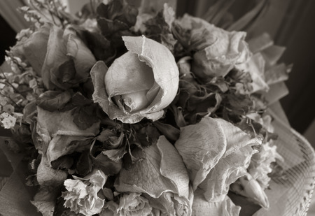 wither: Black and white style of wither rose as background