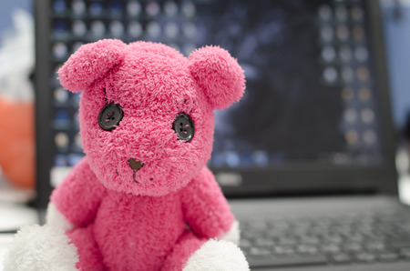 pink teddy bear: The pink teddy bear sit on the laptop