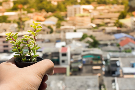The hands holding the fresh tree against to the urban view in background