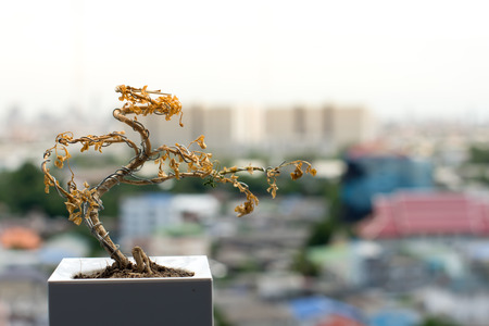 The dead tree against to urban view in the background 版權商用圖片