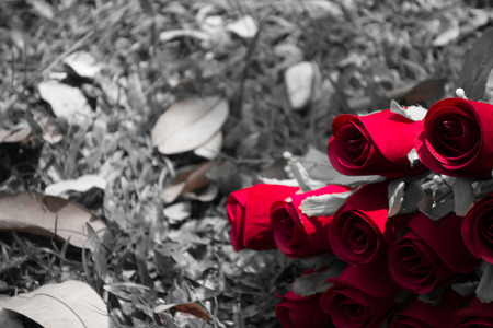 The red roses with garden in  background Stockfoto