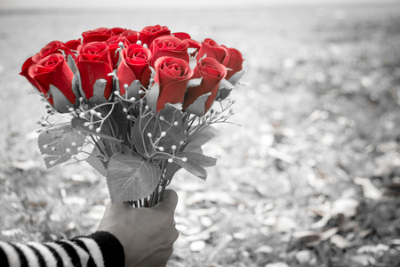 Woman's hand holding bouquet of red roses in the garden