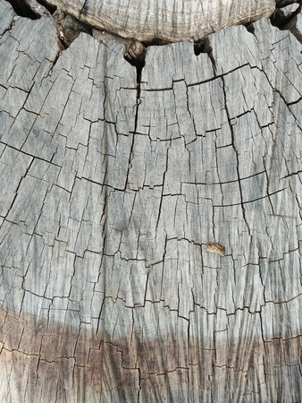 The top view close up of stump tree Stockfoto