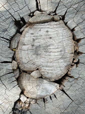 The top view close up of stump tree 版權商用圖片 - 70302842