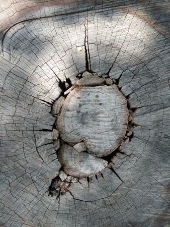 The top view close up of stump tree 版權商用圖片 - 69455462