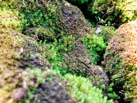 The close up of fresh moss with sunlight