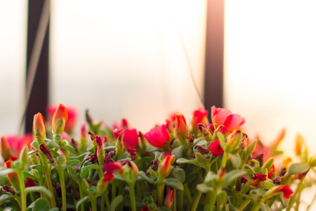 The fresh pink flower with sunlight as blackground Stockfoto