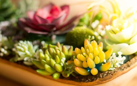 The close up of artificial flower garden with sunlight and flower