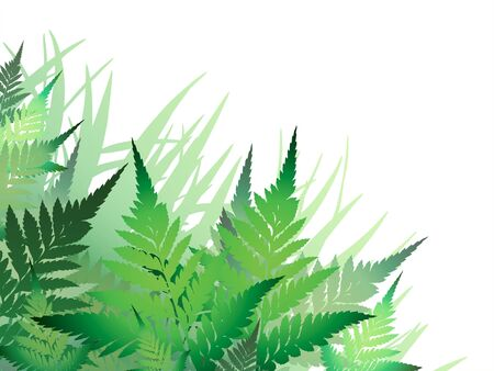 Fern Illustration  (leaf patterns made from my own pictures, not from commercial brushes)