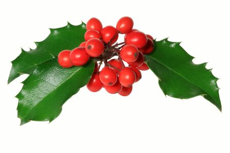 holly berry: Ilex aquifolium - Branch of Holly with red berries, isolated on white. Stock Photo