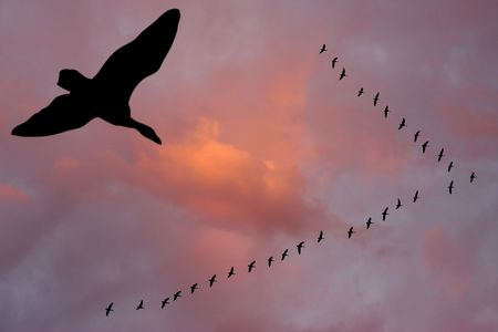 Silhouettes of flying geese in v formation agains a cloudy sunset sky.