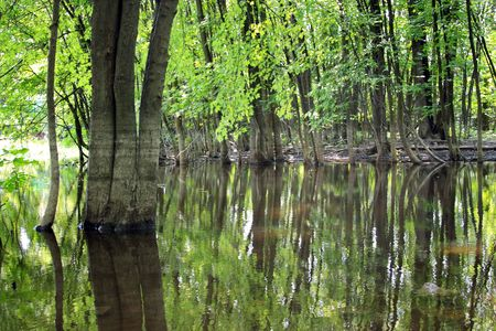 Trees reflected on a wetland water surface. Stock Photo