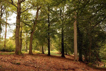 Sunlight in an Autumn Woodland