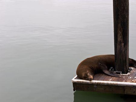 Sleep Seal
