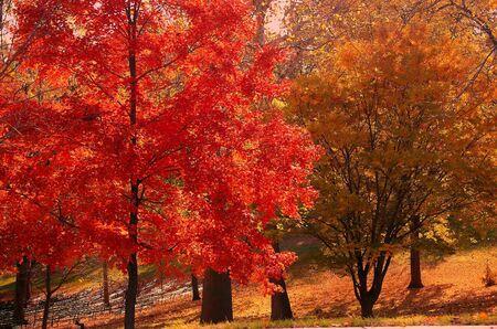 가을 빨강과 황금 화려한 잎