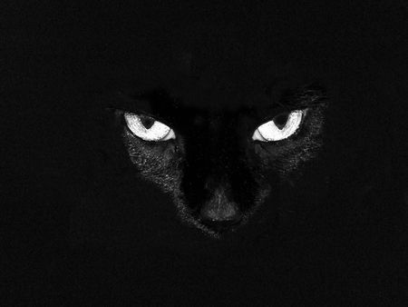spooky black cat with white glowing eyes Imagens