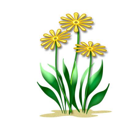 色とりどりの花や白い背景の上の葉