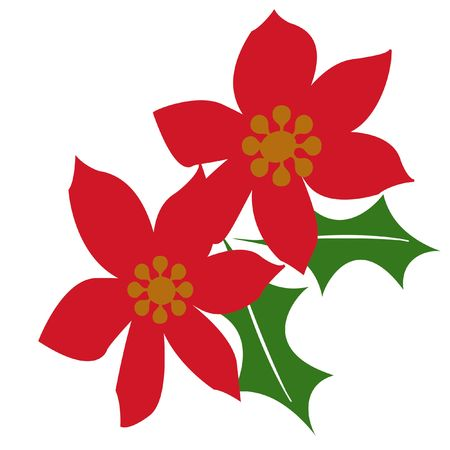 red poinsettias on white background with green holly illustration